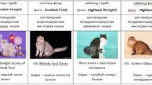 10 важных критериев, которые  необходимо учесть при  выборе котенка.