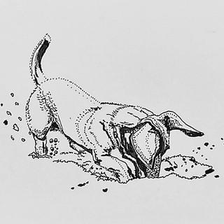 Digging Daschund by Amy Hooton
