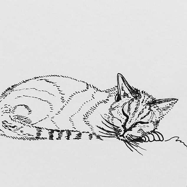Sleeping cat by Amy Hooton