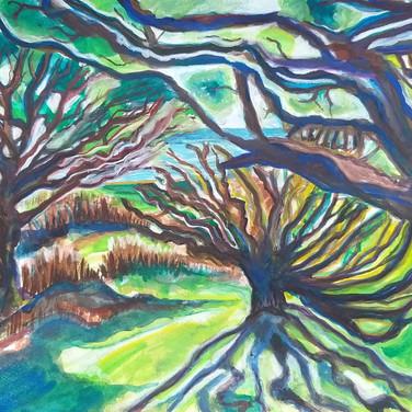 Knarly oaks