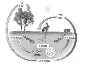 """消息四则:苏富比撤拍叶永青画作;著名""""小尿童""""尿量惊人;她要求死后变""""堆肥""""……"""