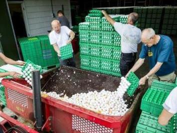 """欧洲发现""""毒鸡蛋"""" 达数百万枚波及多国"""