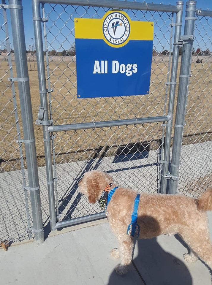 Becky Stobart's dog George 2