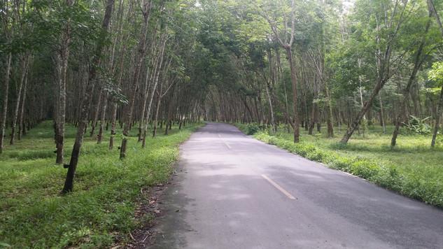 Southern Thailand near the Malaysian border