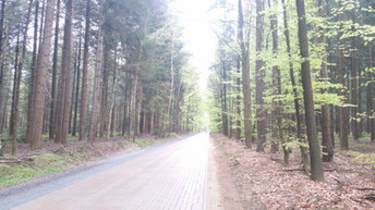 A forest in Germany
