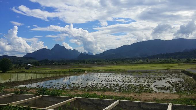 Rice fields, Laos