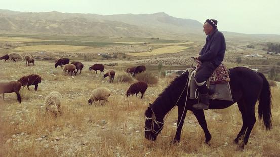 A shepherd at work in Kyrgyzstan