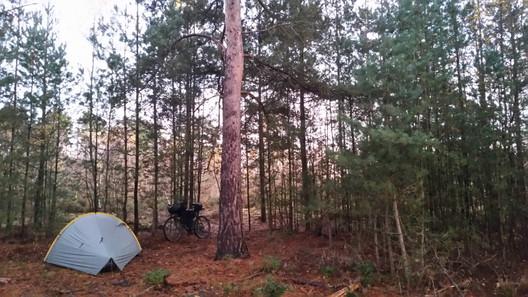 Camping in Surrey
