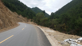 Trees flattened by landslides, northern Yunnan