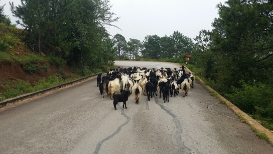 Caught in traffic, Yunnan