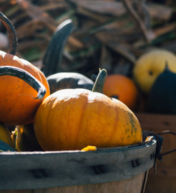 Tulia Tips: Pumpkins!