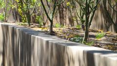 Bel Air Garden