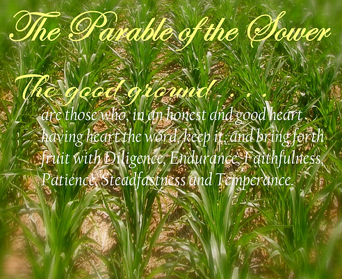 The Parable of the Sower | Kimley Dunlap-Slaughter