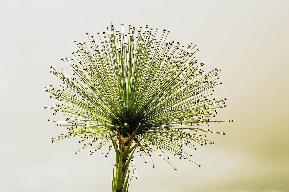 flower-2071522_1920.jpg
