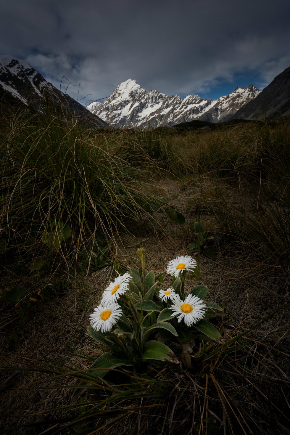Mount cook Photo tours NZ