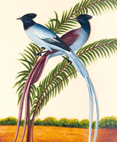 Jungle Babbler Card