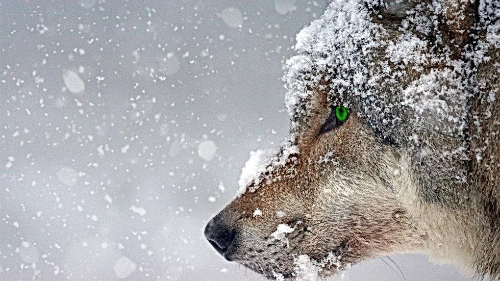animal-carnivorous-cold-326097.jpg