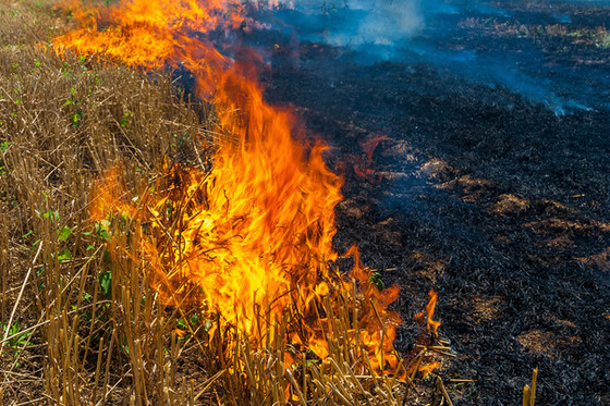 Of Business and Burning Fields