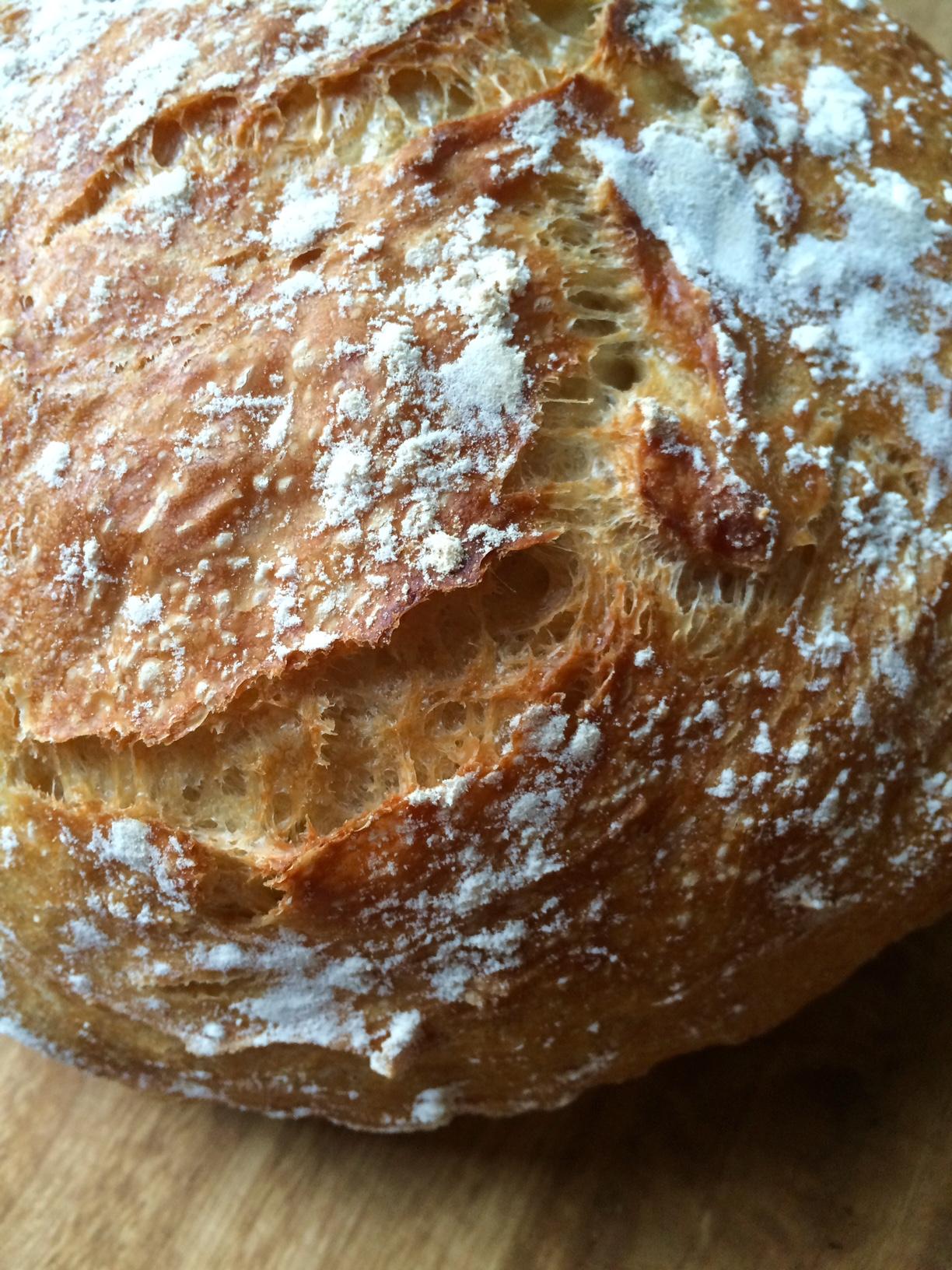no-knead brood
