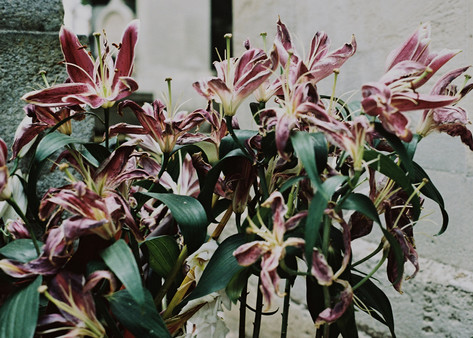 Oriental Lilies | Pere Lanchaise Cemetry, 2017
