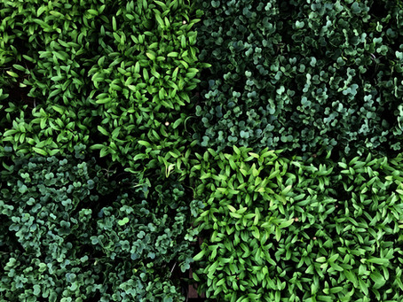 Microgreens. The Nutrition Punch.
