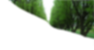 Tree%20Lined%20Path_edited.png