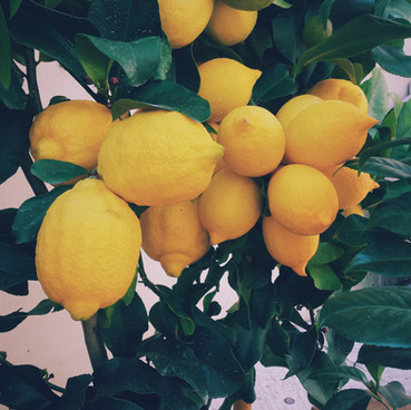 Citrons fruit journalier