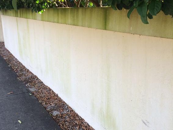 dp wall.JPG