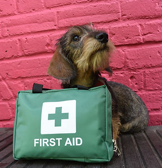 Dog first aid london canine first aid
