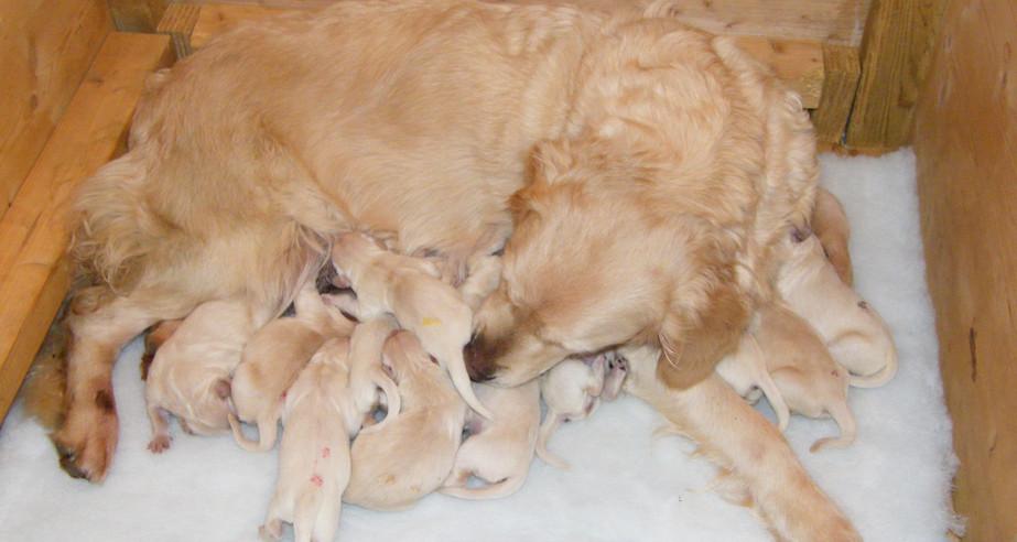 Ellie & pups jan 2013 1 day (13).JPG