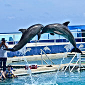 Dolphin Discovery Cayman Islands Amvivo