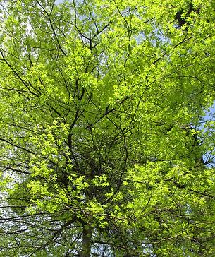 tree-isel-park-by-adrienne-matthews.jpg