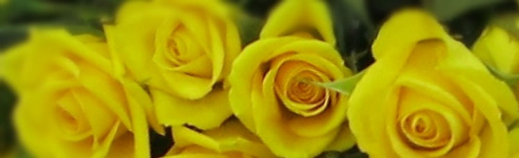 yellow-roses-2.jpg