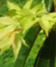 leaves-by-adrienne-matthews.jpg