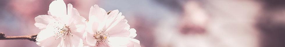 blossom closeup.jpg