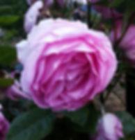 rose-adrienne-m.jpg