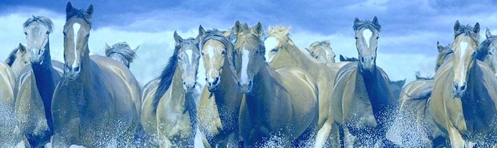wild-horses (1).jpg