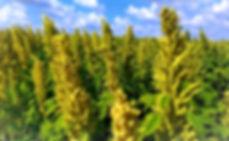 IMG_0713_edited_edited.jpg