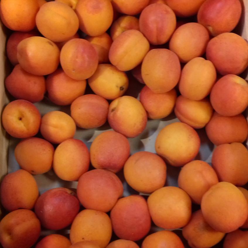 Abricots locaux
