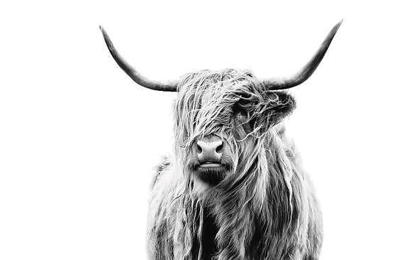 cow full2.png
