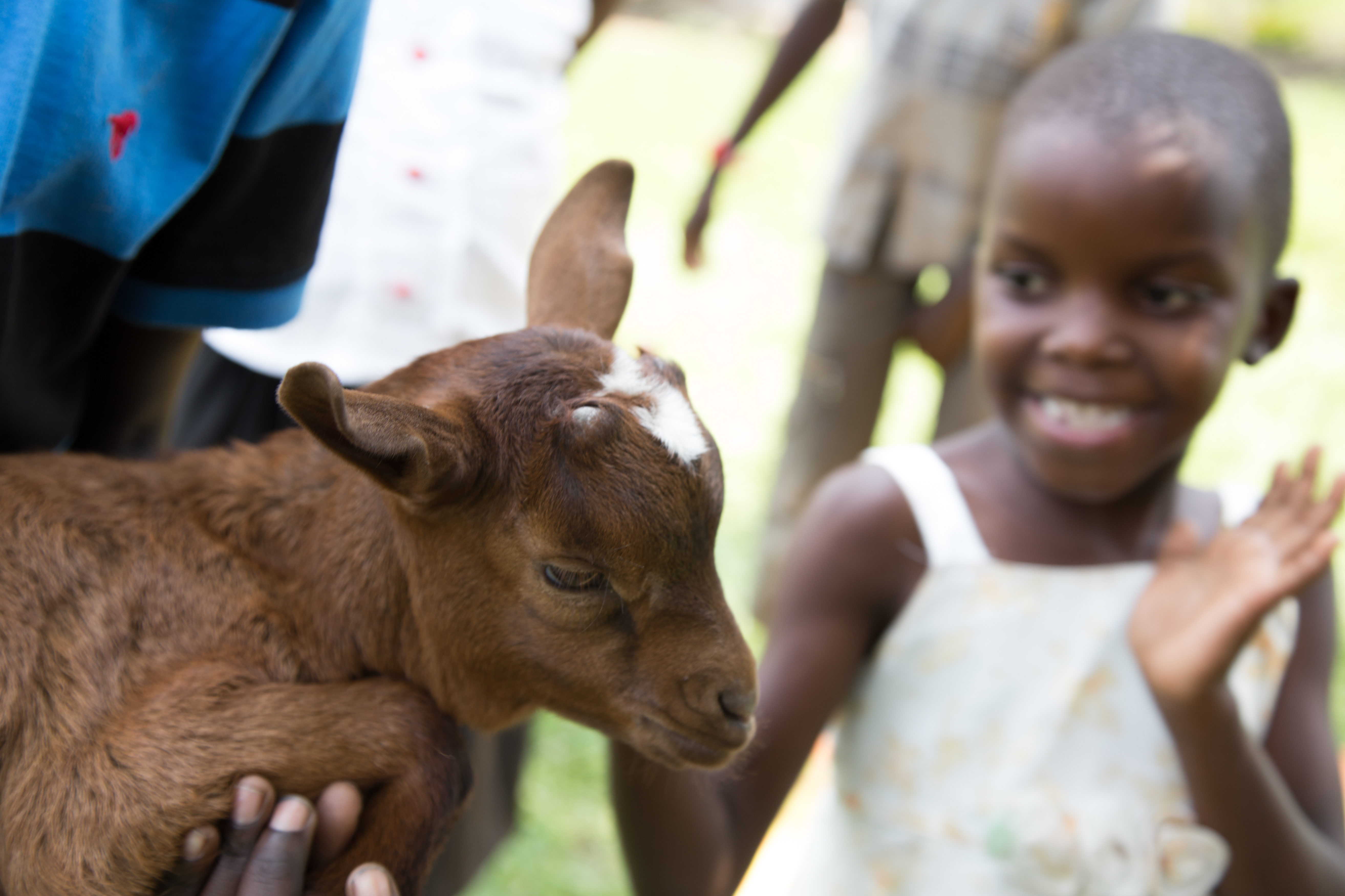 Cute goat and Ugandan child smiling