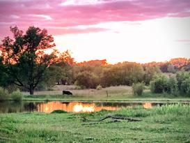 cowabella sunset.png