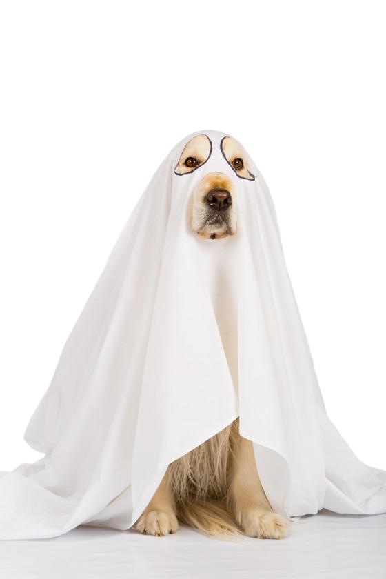 Ghostwriting  - Marketer's Best Friend