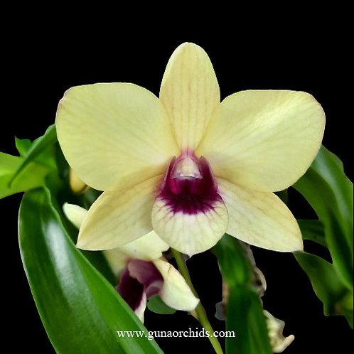 Dendrobium Creamy Red Lip - FF | BS