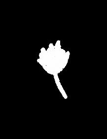 Single white flower-05.png