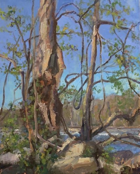 River Series No. 19