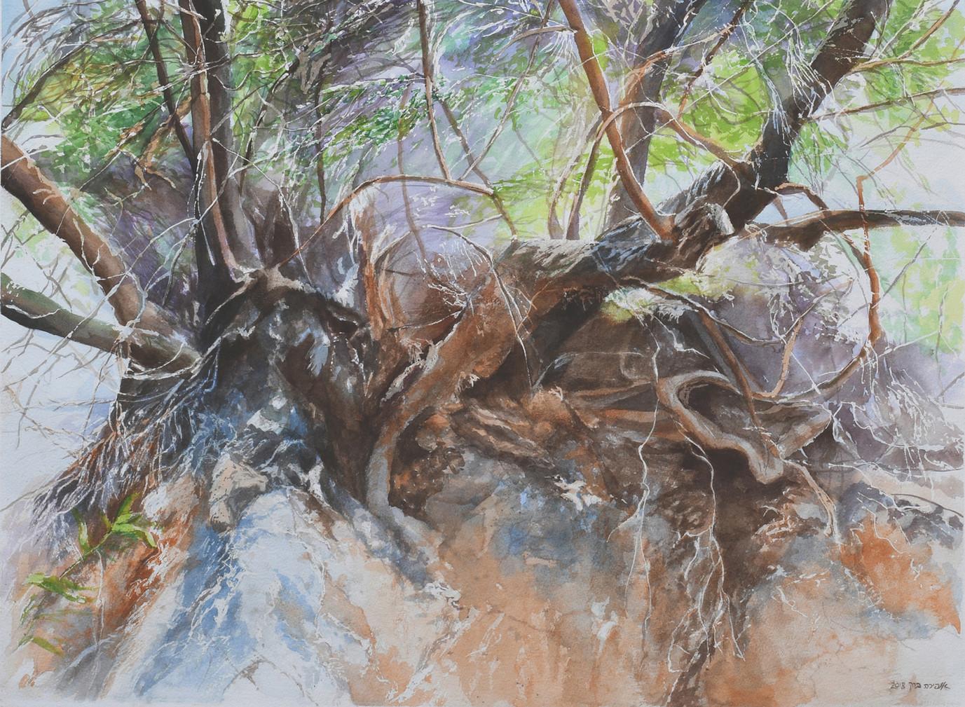 Roots-Watercolor- 71X52cm-2018