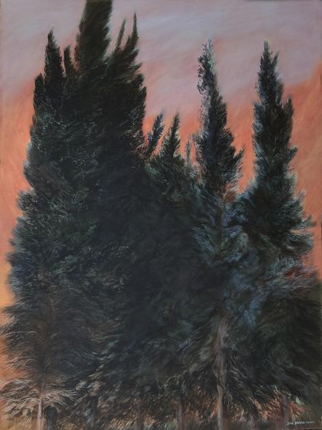 Cypress tress-Acrylic-90X120-2006