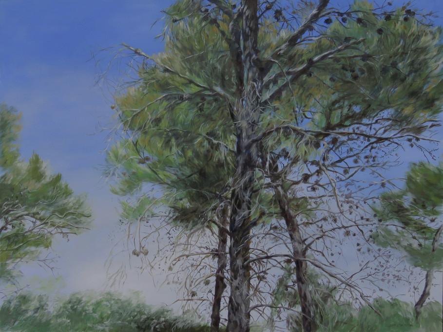 Pine trees-Oil-120X90cm-2017