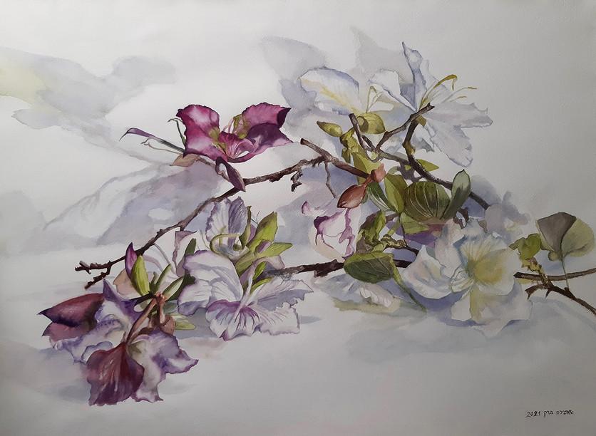 Bauhini in blossoms-Watercolor-74X55
